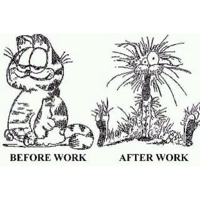 17 Best Images About Garfield And Friends On Pinterest