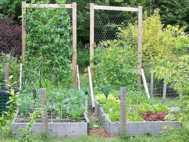 Square Foot Garden | Flickr: Intercambio De Fotos