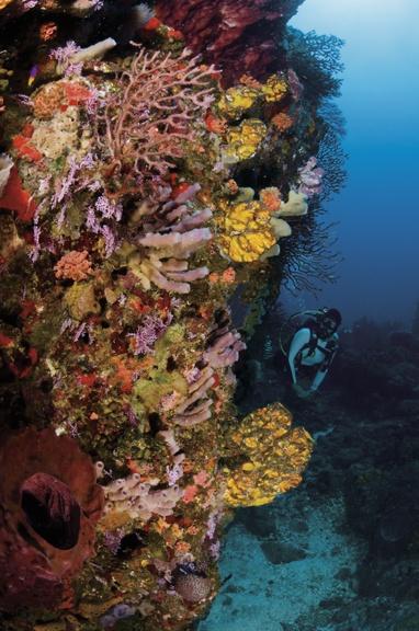 17 Best Images About Scuba Diving On Pinterest