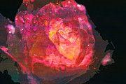 """New artwork for sale! - """" Rose Rain Raindrops Flower Petal  by PixBreak Art """" - http://ift.tt/2mxPwLS"""
