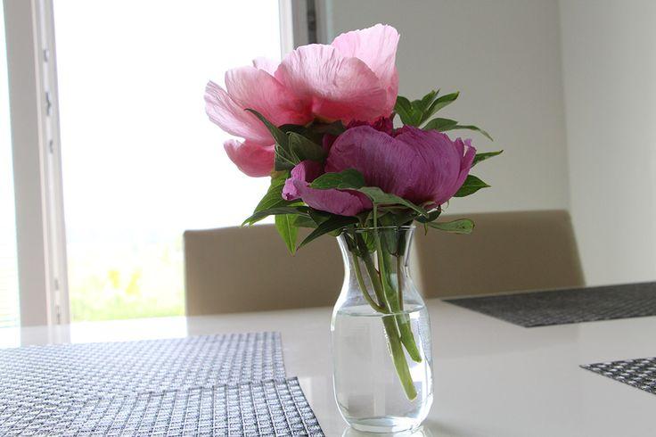 Domov (náš a nejen ten náš) je díky zahradě pořád krásný a voňavý...