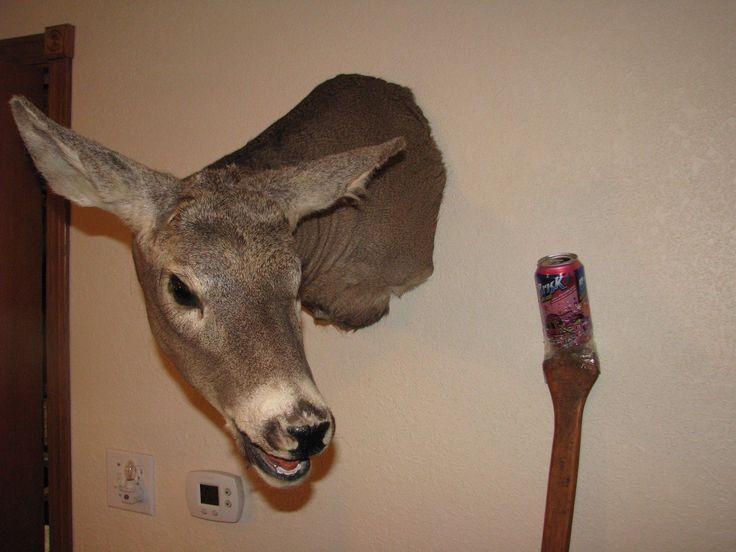 Whitetail Deer Head Shoulder Mount Taxidermy Mounted Shed Antler Hunt Mule Rack | eBay