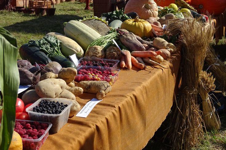 Stoisko z warzywami na Dożynkach w Masłowie