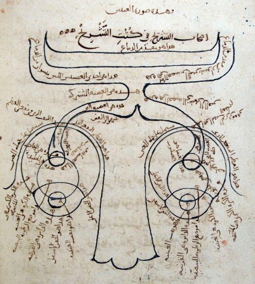 New anatomy discoveries