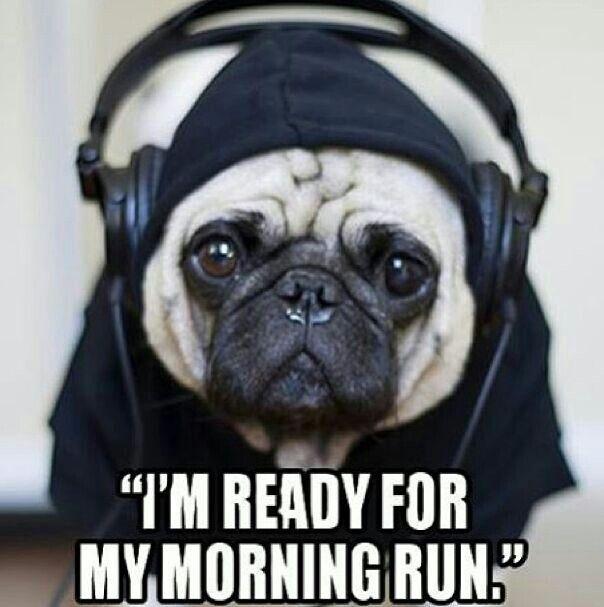 runner pug