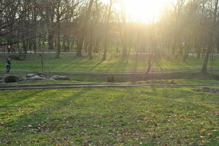 Neața si o zi cu cât mai mult soare - Picture uploaded and hosted by www.iCraiova.com The Website for Craiova and her citizens