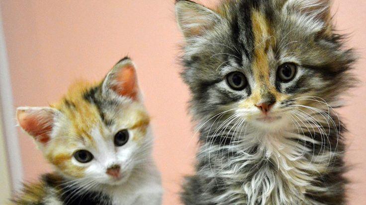 Broward Animal Shelter Cats