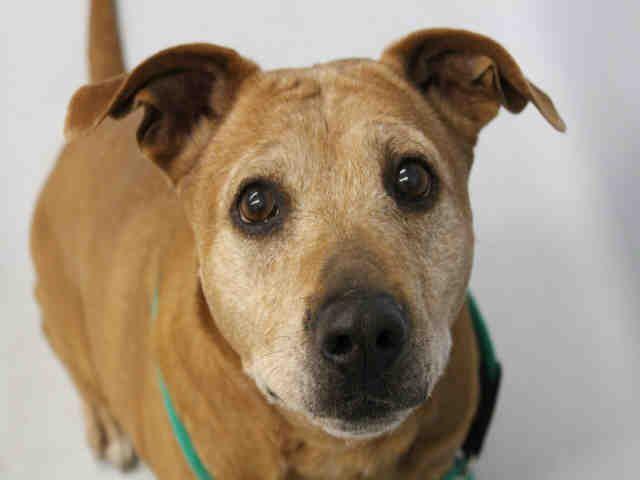 A1392746 Wallis Humane Society Of The Pikes Peak Region Animal Shelter Humane Society Pets