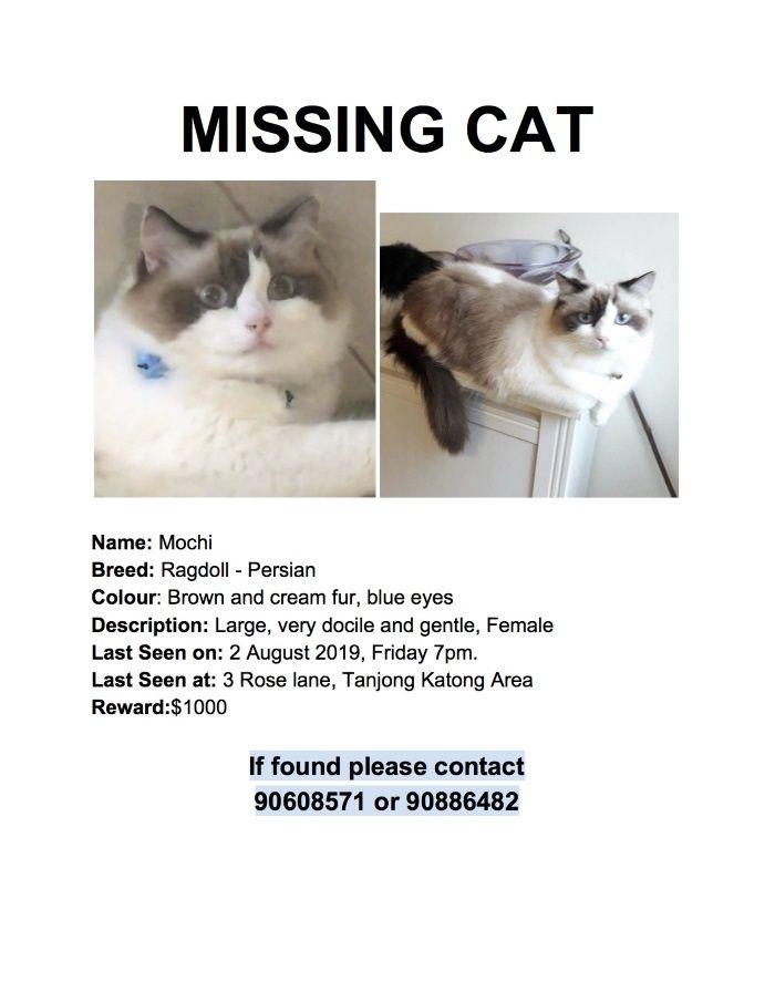 Name of pet: Mochi Breed: Ragdoll Persian cat Color Cream ...