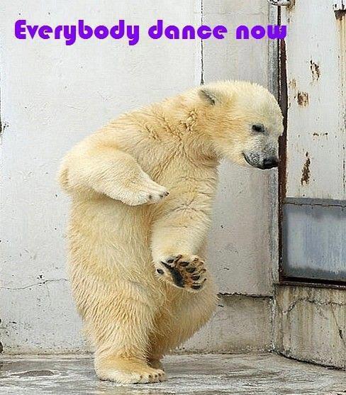 Dancing Babies Cute: 10 Best Dancing Animals Images On Pinterest