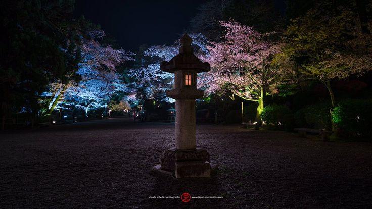 #sakura #cherry #blossoms #lightup #miidera #onjoji #temple #otsu #shiga #japan #japanimpressions #桜  #夜桜 #ライトアップ #三井寺 #園城寺 #大津 #滋賀県 #日本 #sonyimages #sonyalphaclub #sonyalphasclub #sonyalpha #sonya7rii #sonya7lovers #sonyzeiss1635 #rollei #compacttraveler #rolleimoments www.japan-impressions.com