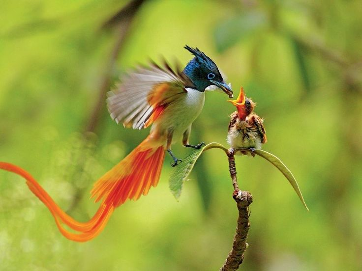 Natural love is present in Nature.