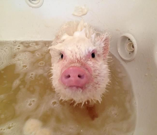 they said I needed a bath....how flipping cute is he! ;-)
