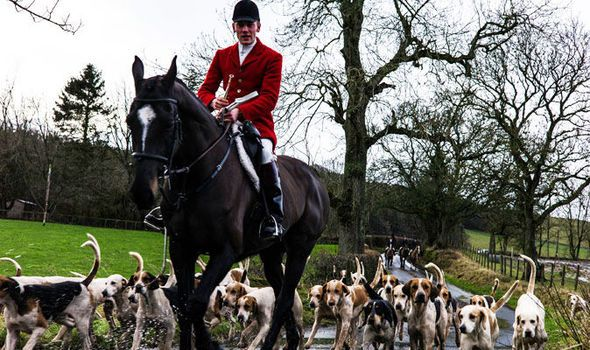 MP blasts fox hunting: 'Brits want the blood sport consigned to history