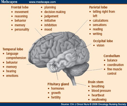 25+ Best Ideas About Frontal Lobe Function On Pinterest. Flow Cytometry Compensation Kogi Beef Truck. Halloween Jeopardy Game Us Bank Business Card. Itil Configuration Management. Dynamics Gp Integration Manager. How To Protect Your Home From Intruders. Insurance Lead Services Solarwinds Orion Maps. Medical Transcription Training Programs. How To Avoid Impotence Adts Dance Competition