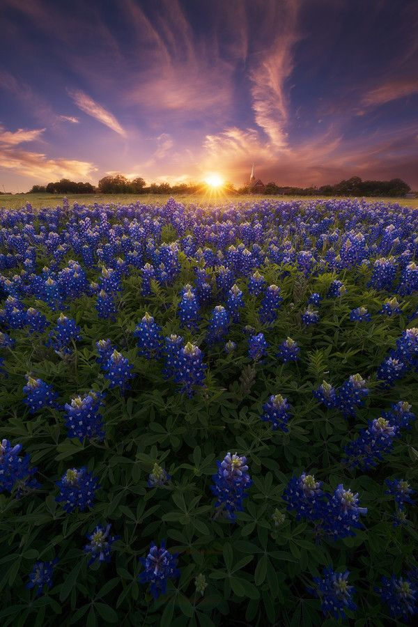 A Canvas of Texas Spring, Round Rock, Texas, by Nagesh Mahadev, on 500px.