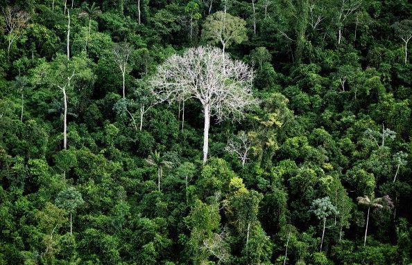 The Amazon rainforest is seen near construction of the Belo Monte dam complex in the Amazon basin on June 15, 2012 near Altamira, Brazil.