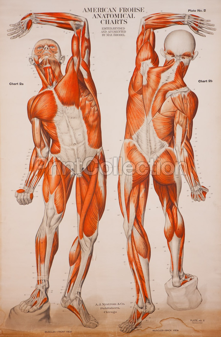 90 best Anatomy images on Pinterest   Human anatomy, Medical science ...