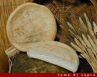 """Toma of goat  The origins of the name lead in Piedmont from """"Tuma"""", which means a fall, in reference to the precipitation of casein during the coagulation of milk. The production area covers the whole region of Basilicata."""