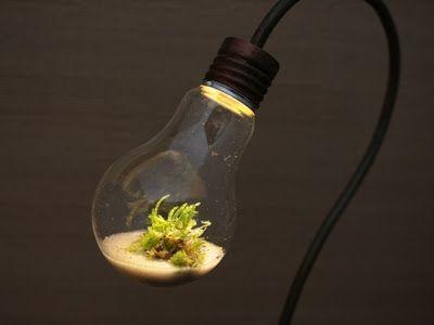 The Fern and Mossery: Moss Monday: Desk Lamp Terrarium