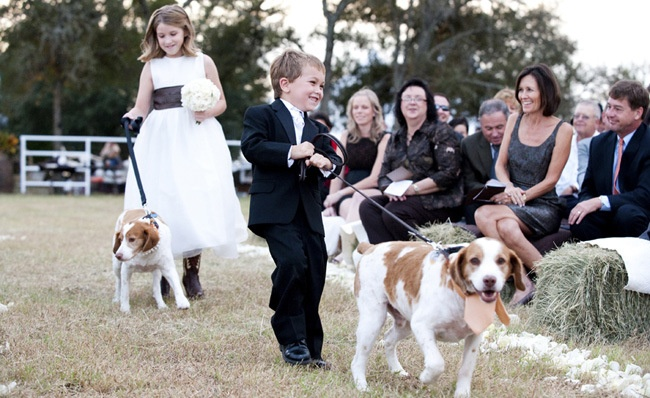 dogs wedding outfits - Google Search