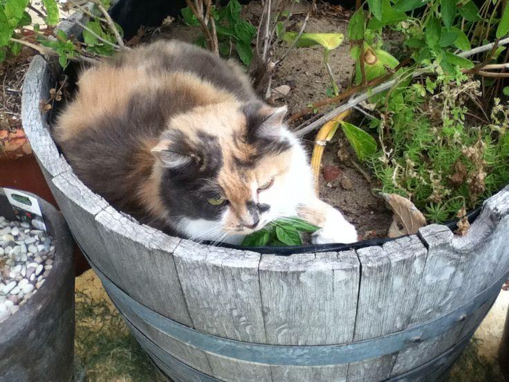 Candy loves the garden