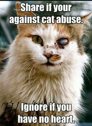 Anti- animal abuse.
