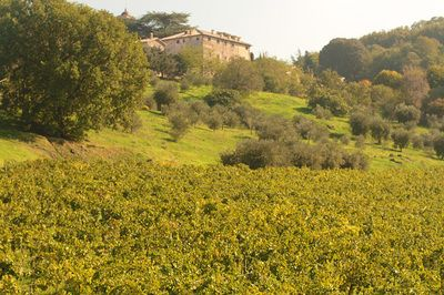 Wine Estate - Eremo Tuscolano - Azienda Agricola Valle Vermiglia - easyfrascati.com