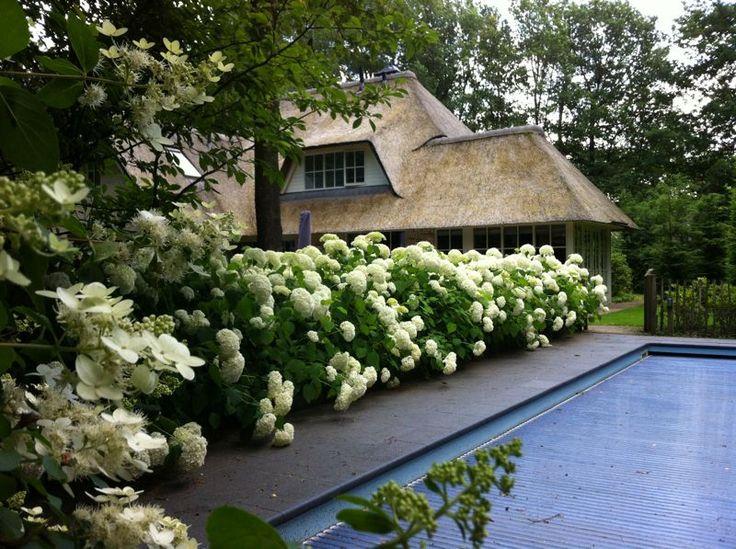 Voortuinen strak mooie hortensia 39 s in een tuin in for Mooie voortuinen foto s