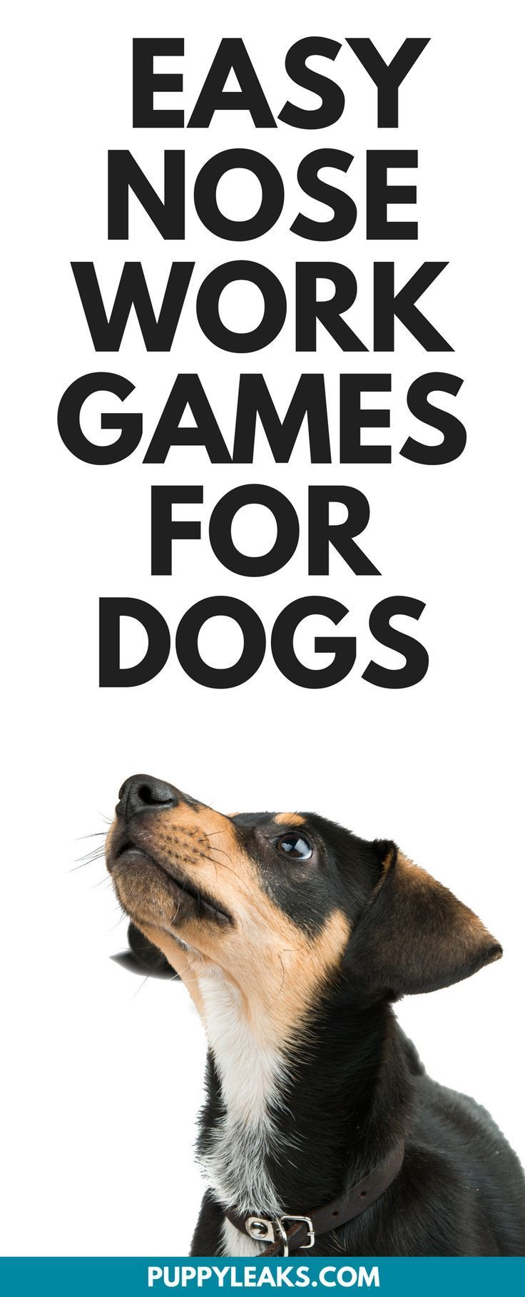 Three Simple Nose Work Games To Play With Your Dog Dog Training