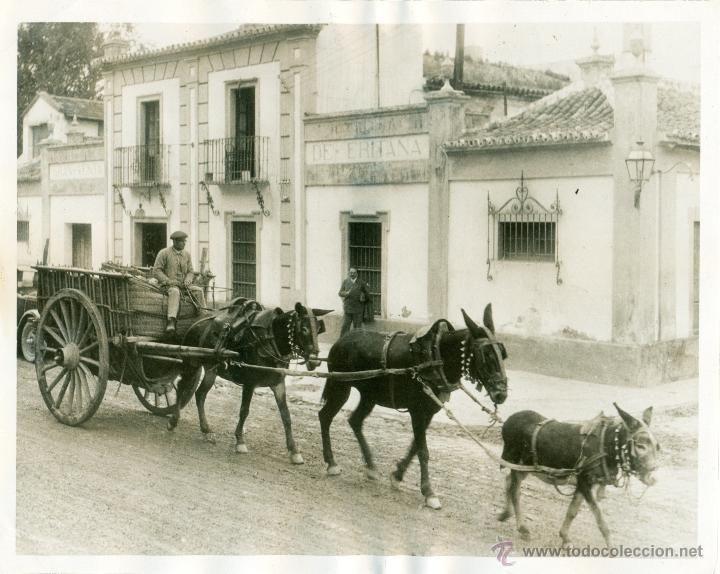 SEVILLA. GRAN VENTA DE ERITAÑA. HACIA 1930. FOTO DE PRENSA. GRAN TAMAÑO. - Foto 1