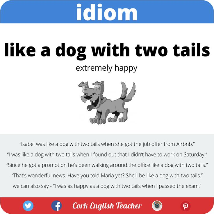 Idiom 'Like a dog with two tails'.