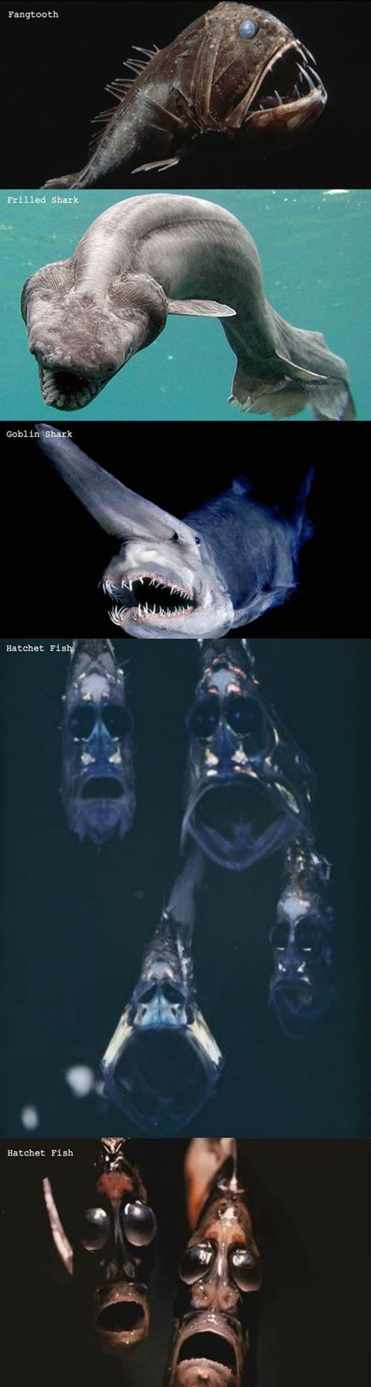 That Is Some Scary Stuff~~~I'm sure these guys are deep enough I would never see them but I'll never know cause I'll never go in the ocean again!!!!!  Been in 2 of them and that's enough!