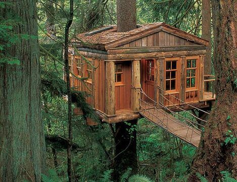 Love this...Cabin, Favorite Places, Amazing Trees, Tree Houses, Bluemoon, Dreams House, Treehouse, Trees House, Blue Moon