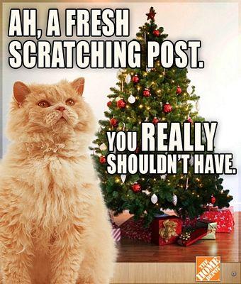 24 best Christmas Memes images on Pinterest   Funny memes, Funny ...