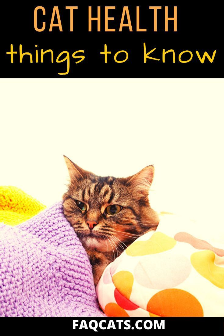 10 Common Tabby Cat Health Problems With Prevention Tips In 2020 Cat Health Problems Cat Health Cute Cats And Kittens