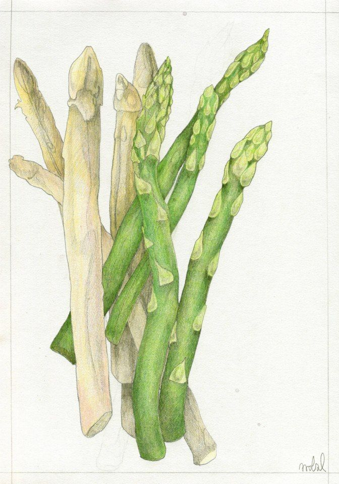 """Asparagus"", for KUCHNIA magazine, by AROBAL, 2014"
