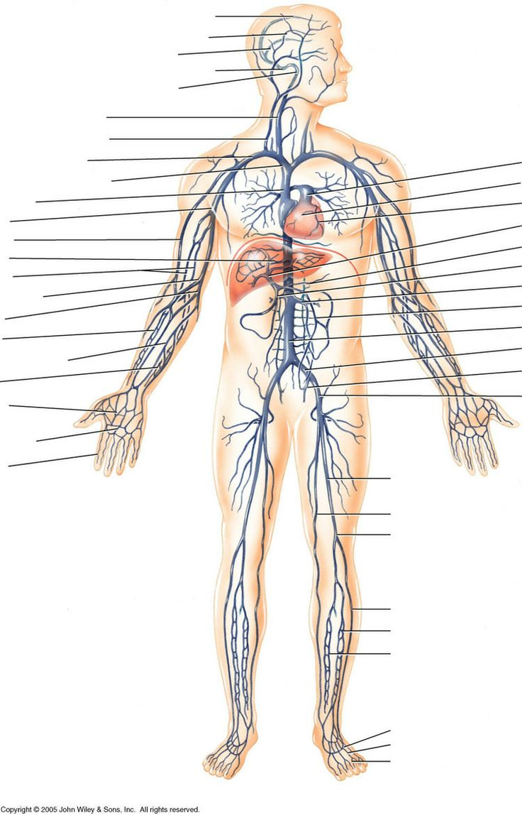 Image For Vein Labeling