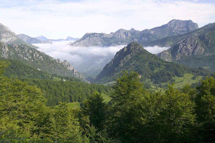 Bosques de los Picos de Europa, Asturias - Bosques del mundo que parecen encantados