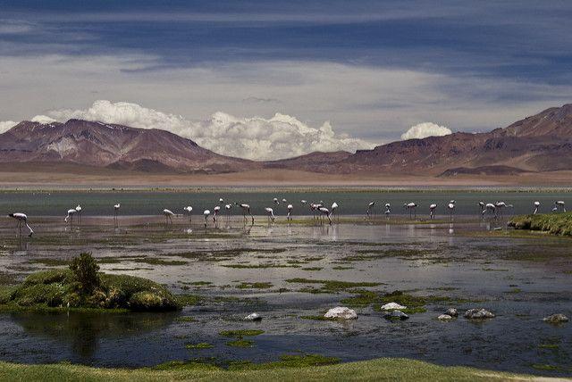 La Reserva Nacional Los Flamencos (4.300 m. sobre el nivel del mar) es parte del Salar de Tara, ubicado en San Pedro de Atacama, en el norte de Chile