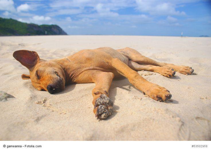 Mit den richtigen Tipps kann ein Urlaub mit dem Hund für alle total entspannt sein!