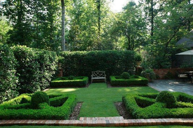 Boxwood (46 pics): planting, breeding, grooming secrets