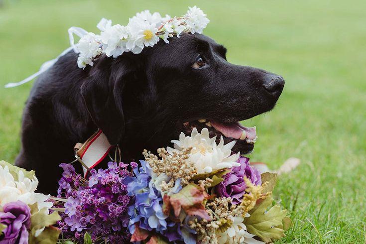 Ce chien mourant de 15 ans a tenu le coup pour assister au mariage de ses maîtres