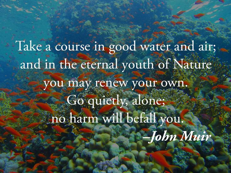 Take a course in good water and air; and in the eternal youth of Nature you may renew your own. Go quietly, alone; no harm will befall you. –John Muir