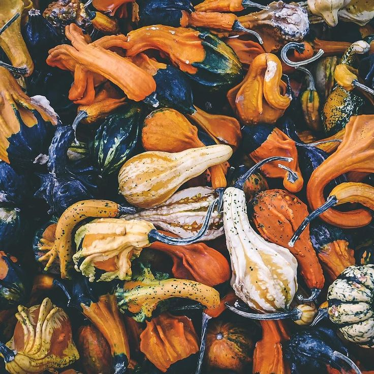 Rozkoszne brzydactwa  . . . . . #whpseasons #nature #naturephotography #naturalbeauty #pumpkin #autumnvibes #autumn #autumncolors #seasons #flatlay #flatlays #flatlaylove #flatlayforever #thatsdarling #vscopoland #farmadyn #creativityfound #shapes #thisweekoninstagram