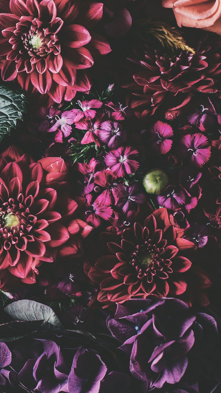 Floral Wallpaper Iphone Xr