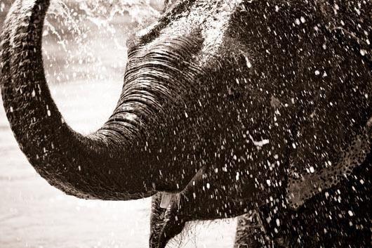 Elephant af Sarah Coghill