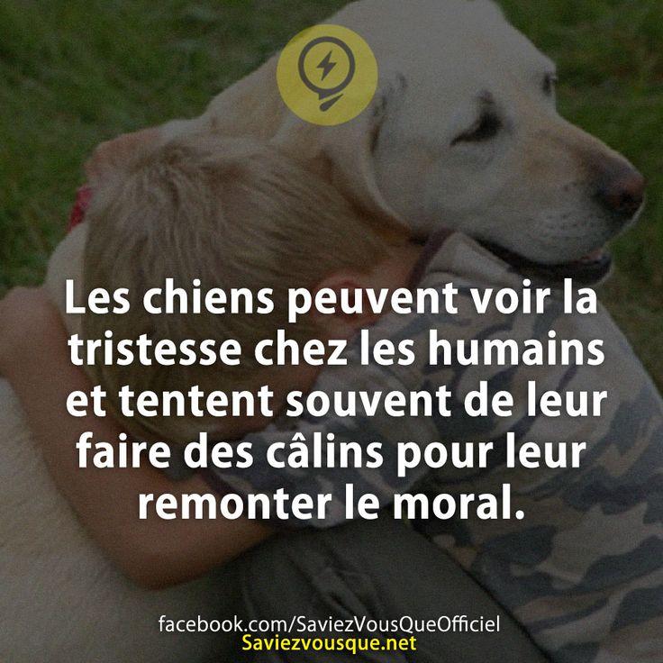 Les chiens peuvent voir la tristesse chez les humains et tentent souvent de leur faire des câlins pour leur remonter le moral.   Saviez Vous Que?