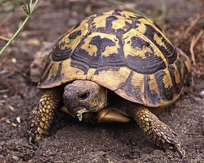 Alimentacion de la tortugas de Tierra