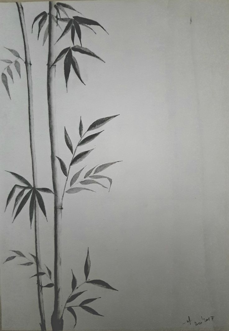 Bamboo Plant Pencil Sketch Plant Sketches Pencil Sketch